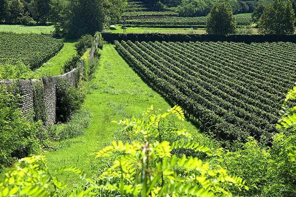Tormaresca-Vineyard-Brolio-Wall