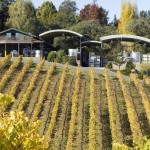Quail Hill Vineyard