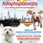 Big Summer Pet Adoption Events Will Save Lives in NYC!‏